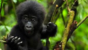 ruanda-salamanca-viaggi
