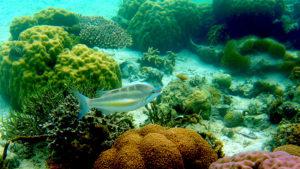 Malapascua Exotic Island Dive - Salamanca Viaggi