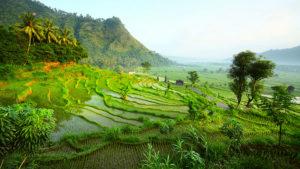 Indonesia | Salamanca Viaggi