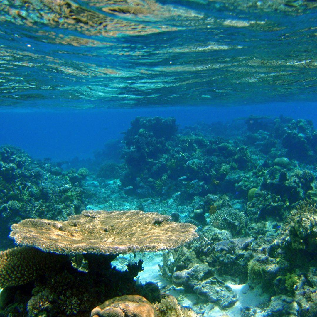 Viaggio alle Fiji00007